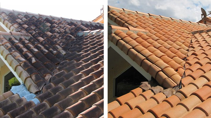 Roof Cleaning mold and mildew removal